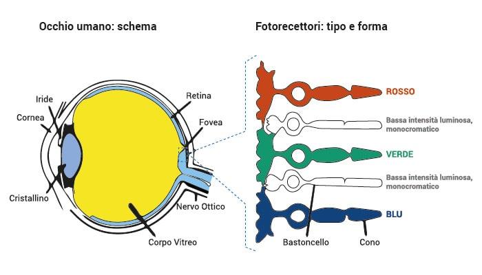 Schema-occhio-metamerismo-cromatico