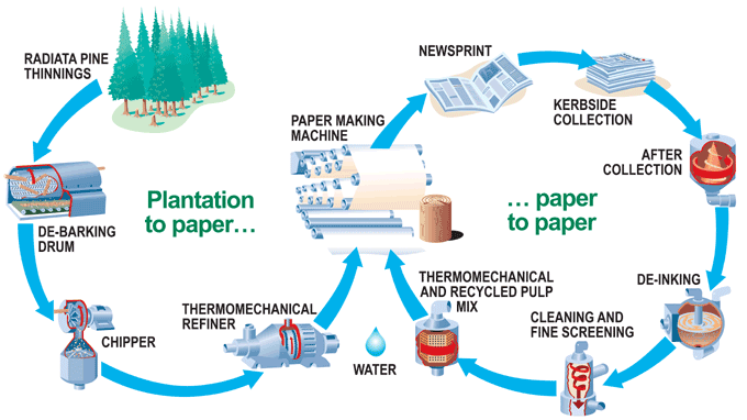 Paper cycle production