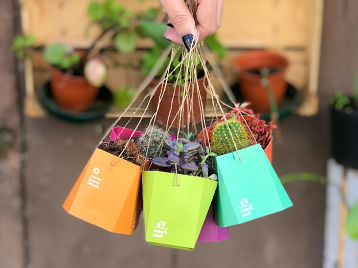 cacti custom packaging design
