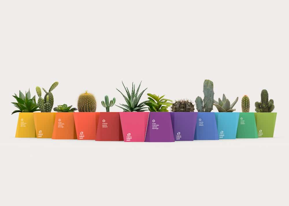 packaging per cactus modulari